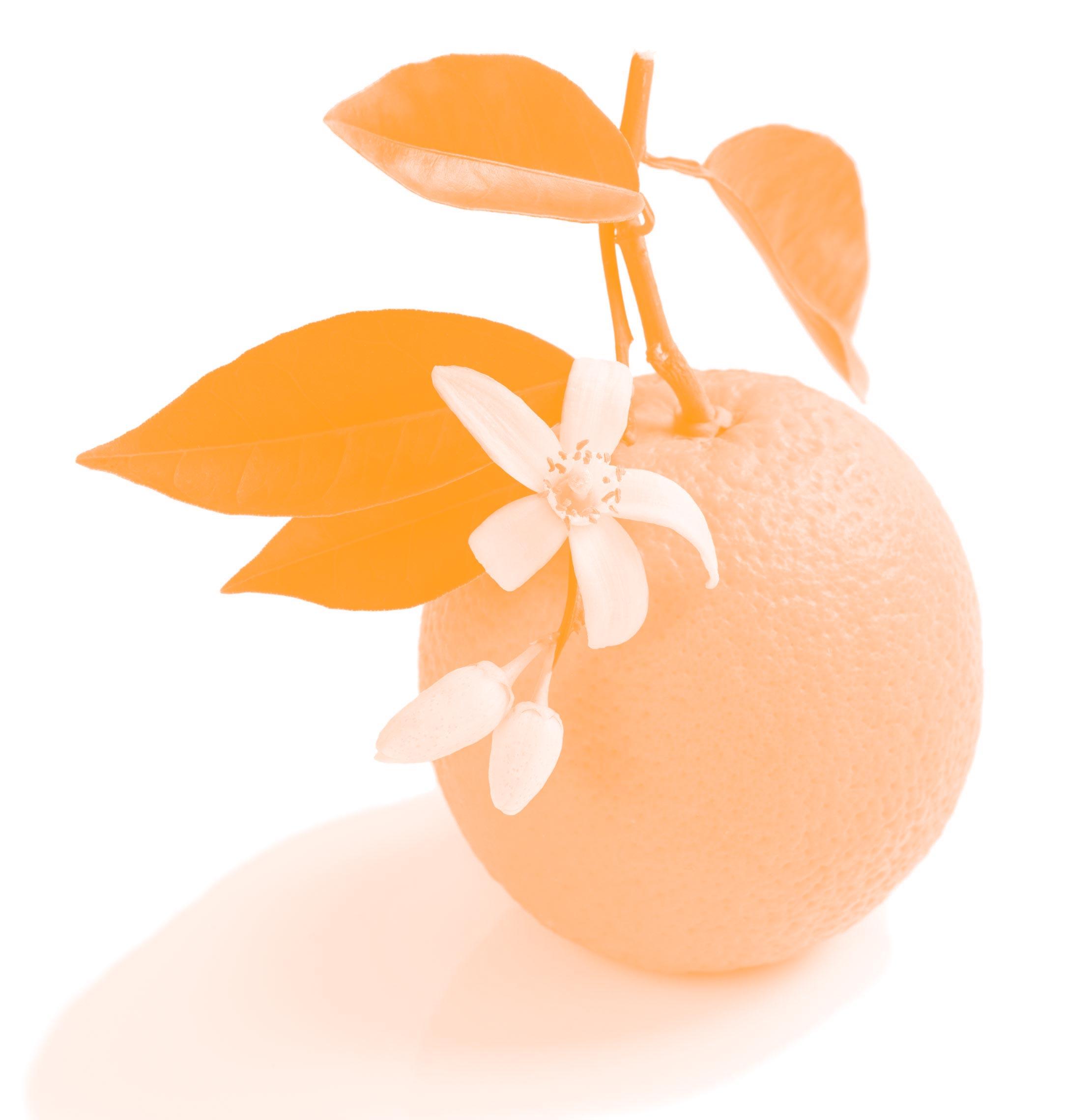 апельсин цитрус эфирное масло ароматерапия аромамасло масло аромат