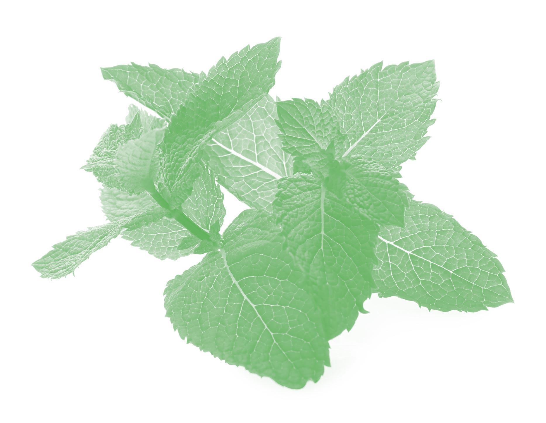 мята ароматерапия аромамасло масло аромат эфирное масло