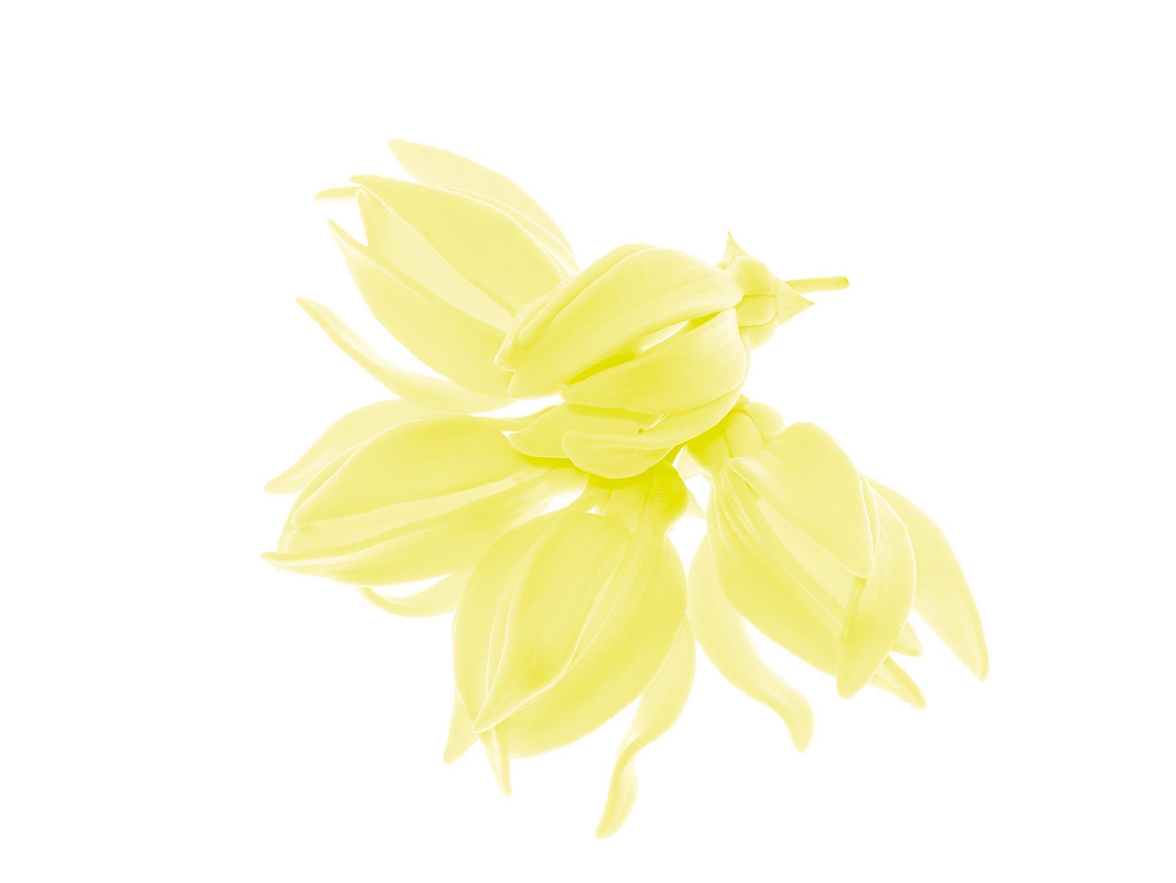 иланг - иланг эфирное масло ароматерапия аромамасло масло аромат
